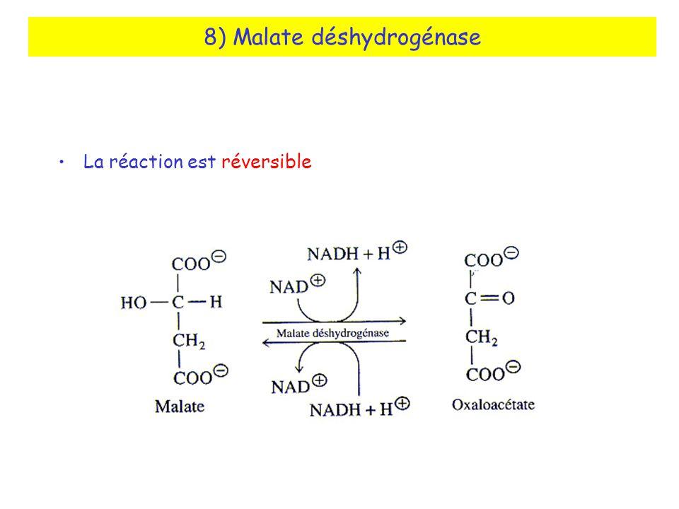 8) Malate déshydrogénase La réaction est réversible