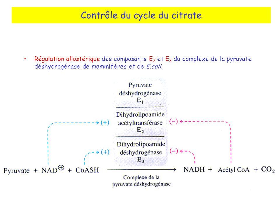 Contrôle du cycle du citrate Régulation allostérique des composants E 2 et E 3 du complexe de la pyruvate déshydrogénase de mammifères et de E.coli.