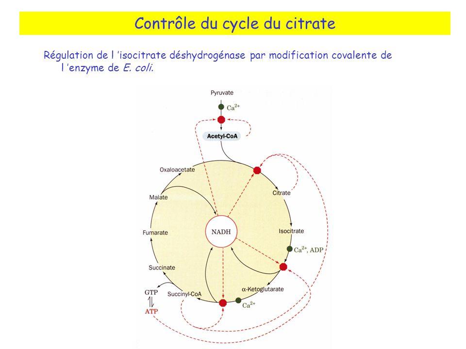Contrôle du cycle du citrate Régulation de l isocitrate déshydrogénase par modification covalente de l enzyme de E.