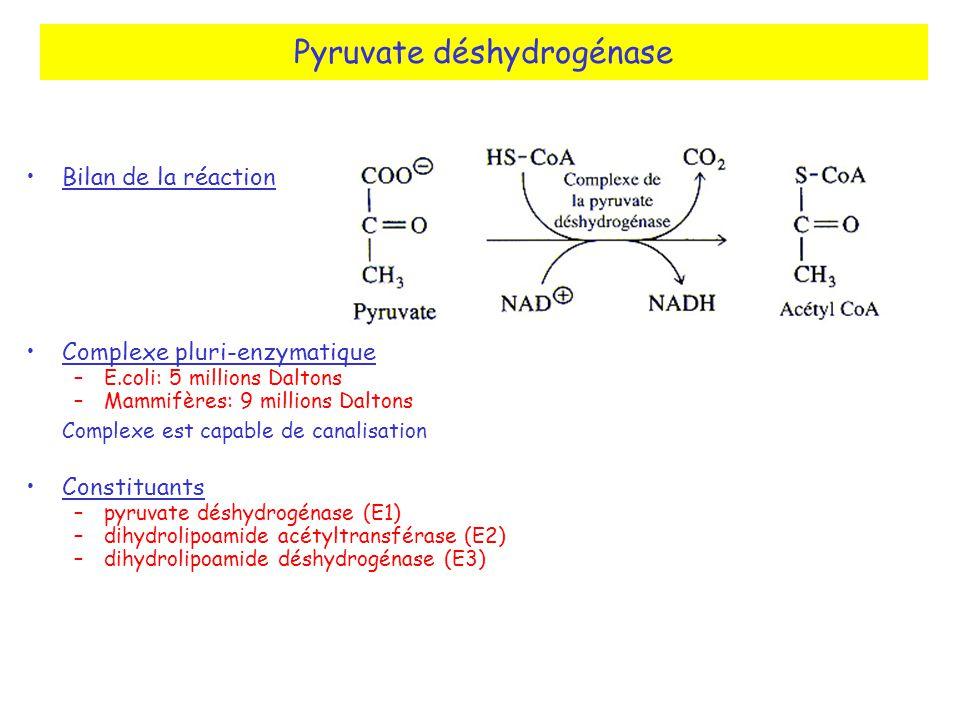 Pyruvate déshydrogénase Bilan de la réaction Complexe pluri-enzymatique –E.coli: 5 millions Daltons –Mammifères: 9 millions Daltons Complexe est capable de canalisation Constituants –pyruvate déshydrogénase (E1) –dihydrolipoamide acétyltransférase (E2) –dihydrolipoamide déshydrogénase (E3)