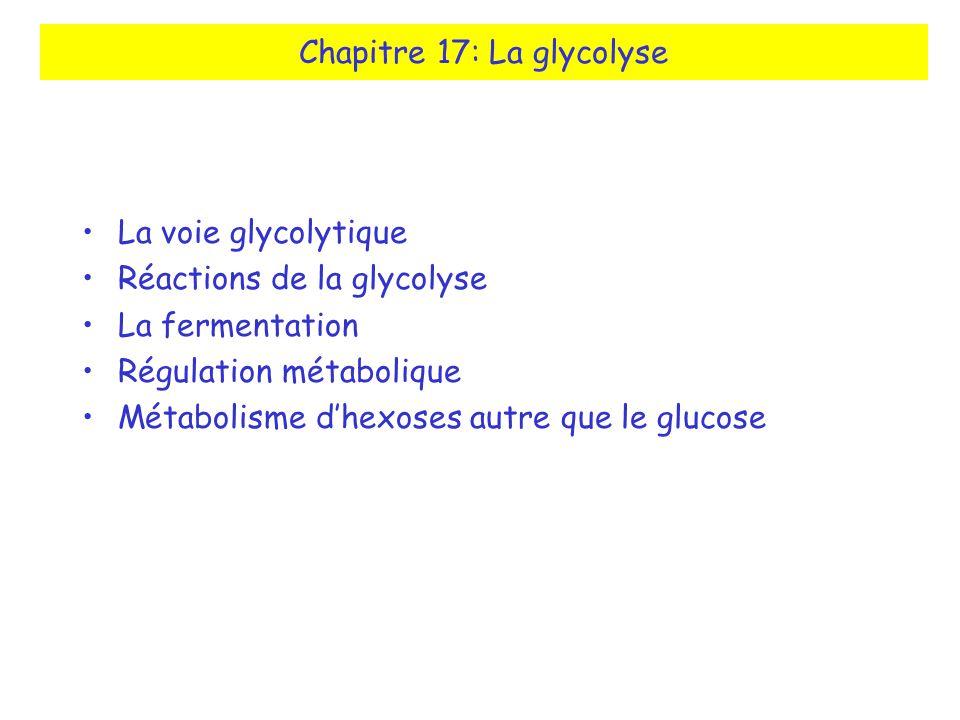 Chapitre 17: La glycolyse La voie glycolytique Réactions de la glycolyse La fermentation Régulation métabolique Métabolisme dhexoses autre que le gluc