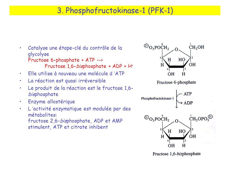 3. Phosphofructokinase-1 (PFK-1) Catalyse une étape-clé du contrôle de la glycolyse Fructose 6-phosphate + ATP --> Fructose 1,6-bisphosphate + ADP + H
