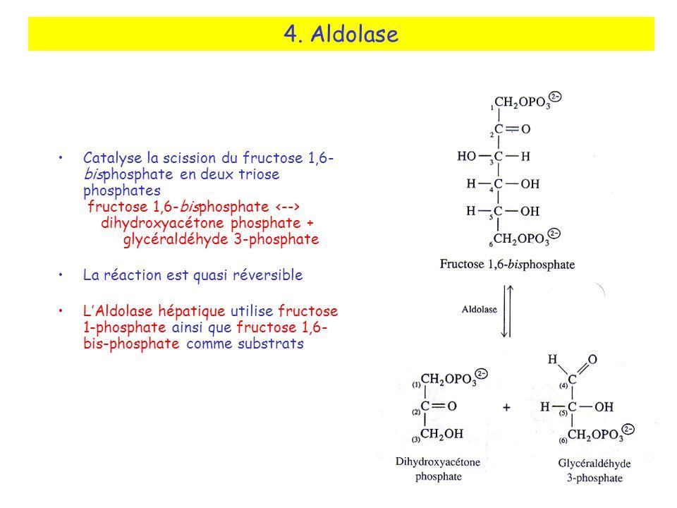 4. Aldolase Catalyse la scission du fructose 1,6- bisphosphate en deux triose phosphates fructose 1,6-bisphosphate dihydroxyacétone phosphate + glycér