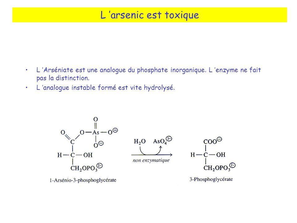 L arsenic est toxique L Arséniate est une analogue du phosphate inorganique. L enzyme ne fait pas la distinction. L analogue instable formé est vite h