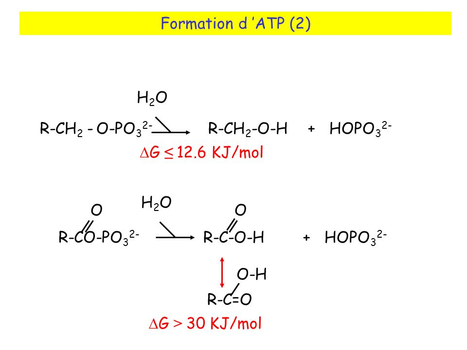 Formation d ATP (2) R-CO-PO 3 2- O R-C-O-H + HOPO 3 2- O H2OH2O R-C=O O-H R-CH 2 - O-PO 3 2- R-CH 2 -O-H + HOPO 3 2- H2OH2O G 12.6 KJ/mol G > 30 KJ/mol