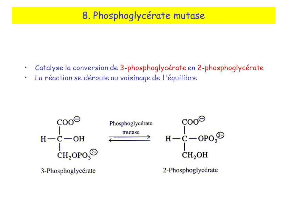 8. Phosphoglycérate mutase Catalyse la conversion de 3-phosphoglycérate en 2-phosphoglycérate La réaction se déroule au voisinage de l équilibre