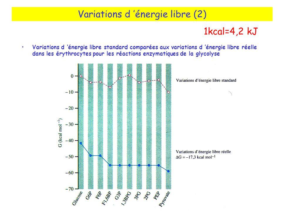 Variations d énergie libre (2) Variations d énergie libre standard comparées aux variations d énergie libre réelle dans les érythrocytes pour les réactions enzymatiques de la glycolyse 1kcal=4,2 kJ