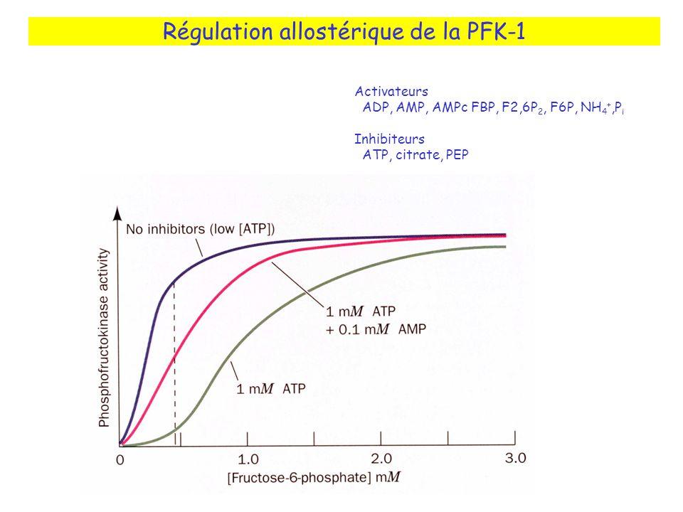 Régulation allostérique de la PFK-1 Activateurs ADP, AMP, AMPc FBP, F2,6P 2, F6P, NH 4 +,P i Inhibiteurs ATP, citrate, PEP