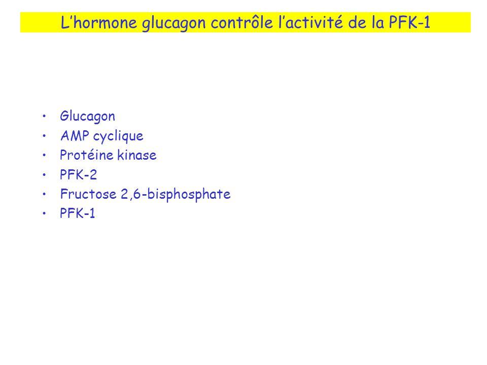 Lhormone glucagon contrôle lactivité de la PFK-1 Glucagon AMP cyclique Protéine kinase PFK-2 Fructose 2,6-bisphosphate PFK-1