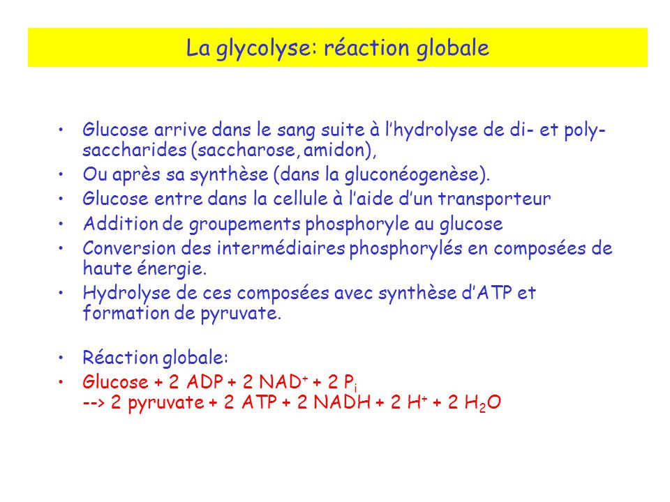 La glycolyse: réaction globale Glucose arrive dans le sang suite à lhydrolyse de di- et poly- saccharides (saccharose, amidon), Ou après sa synthèse (