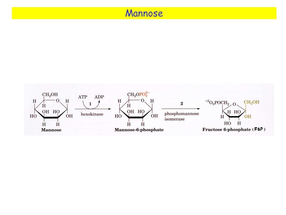 Mannose F6P