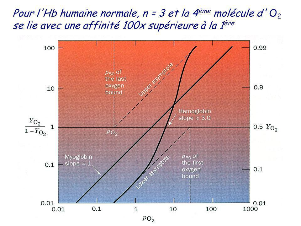 Pour l'Hb humaine normale, n = 3 et la 4 ème molécule d' O 2 se lie avec une affinité 100x supérieure à la 1 ère