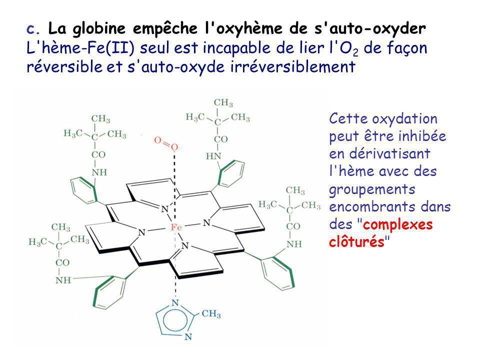 c. La globine empêche l'oxyhème de s'auto-oxyder L'hème-Fe(II) seul est incapable de lier l'O 2 de façon réversible et s'auto-oxyde irréversiblement C