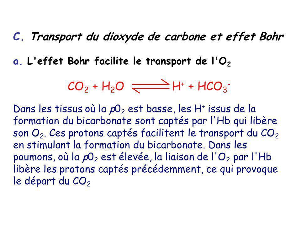 C. Transport du dioxyde de carbone et effet Bohr a. L'effet Bohr facilite le transport de l'O 2 CO 2 + H 2 O H + + HCO 3 - Dans les tissus où la p0 2