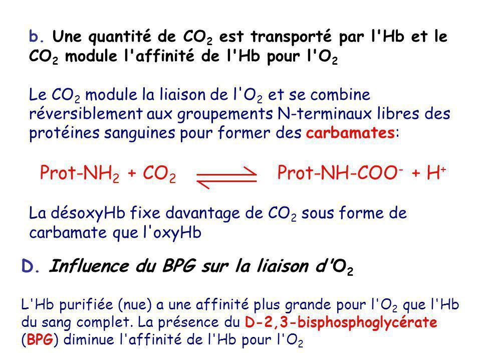 b. Une quantité de CO 2 est transporté par l'Hb et le CO 2 module l'affinité de l'Hb pour l'O 2 Le CO 2 module la liaison de l'O 2 et se combine réver