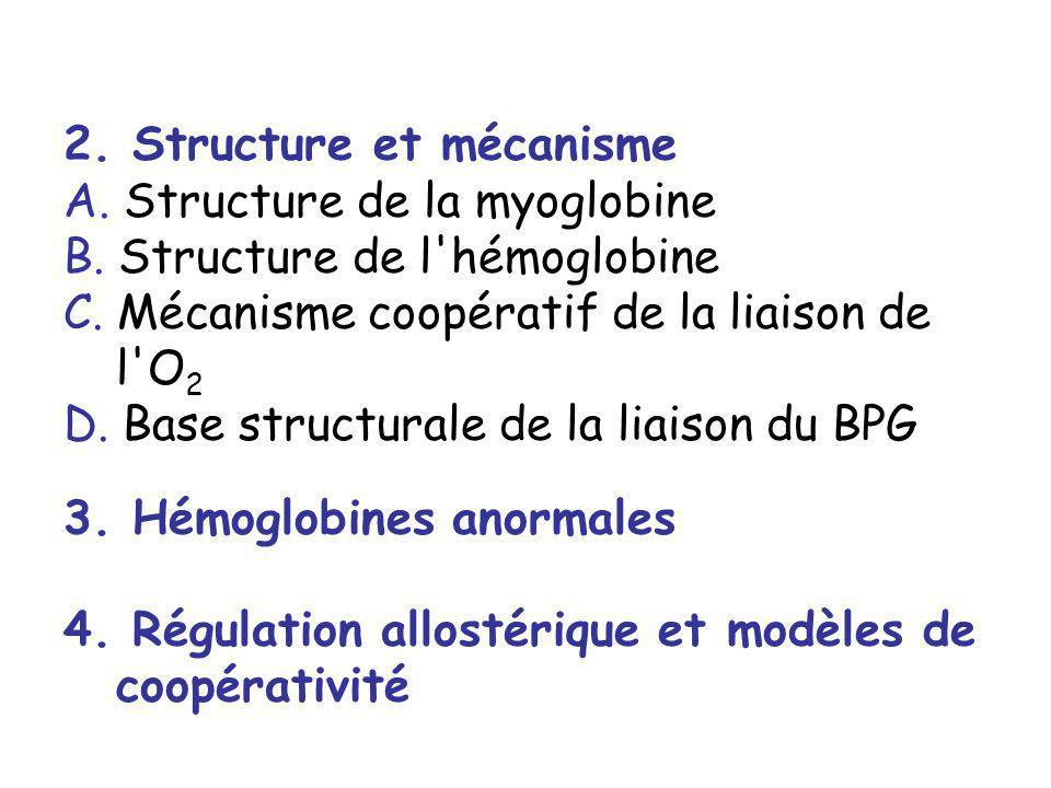 2. Structure et mécanisme A. Structure de la myoglobine B. Structure de l'hémoglobine C. Mécanisme coopératif de la liaison de l'O 2 D. Base structura