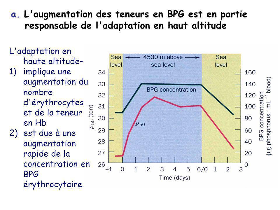 a. L'augmentation des teneurs en BPG est en partie responsable de l'adaptation en haut altitude L'adaptation en haute altitude- 1)implique une augment