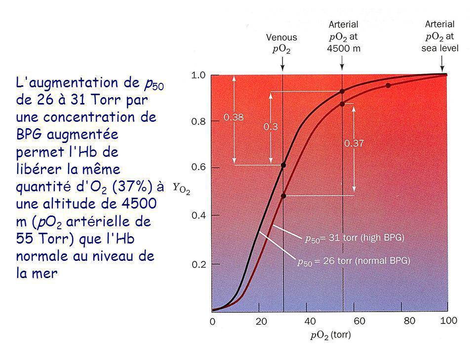 L augmentation de p 50 de 26 à 31 Torr par une concentration de BPG augmentée permet l Hb de libérer la même quantit é d O 2 (37%) à une altitude de 4500 m (pO 2 art é rielle de 55 Torr) que l Hb normale au niveau de la mer
