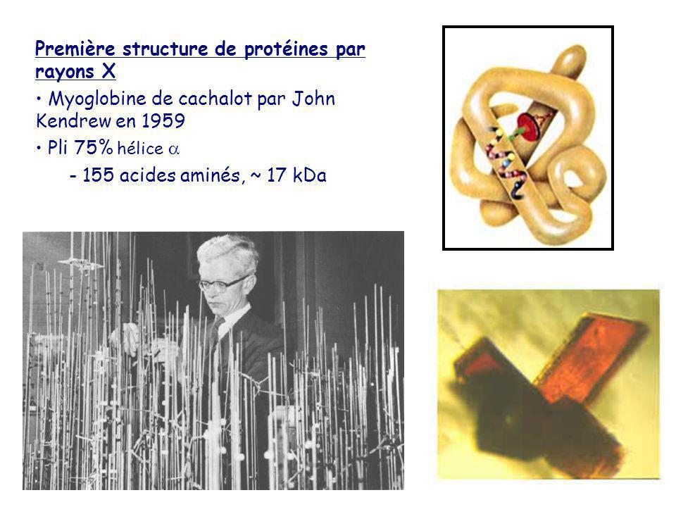 Première structure de protéines par rayons X Myoglobine de cachalot par John Kendrew en 1959 Pli 75% hélice - 155 acides aminés, ~ 17 kDa