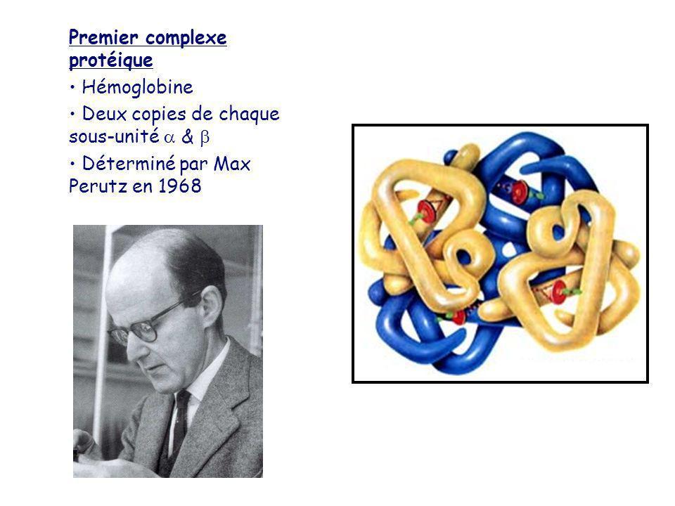 Premier complexe protéique Hémoglobine Deux copies de chaque sous-unité & Déterminé par Max Perutz en 1968