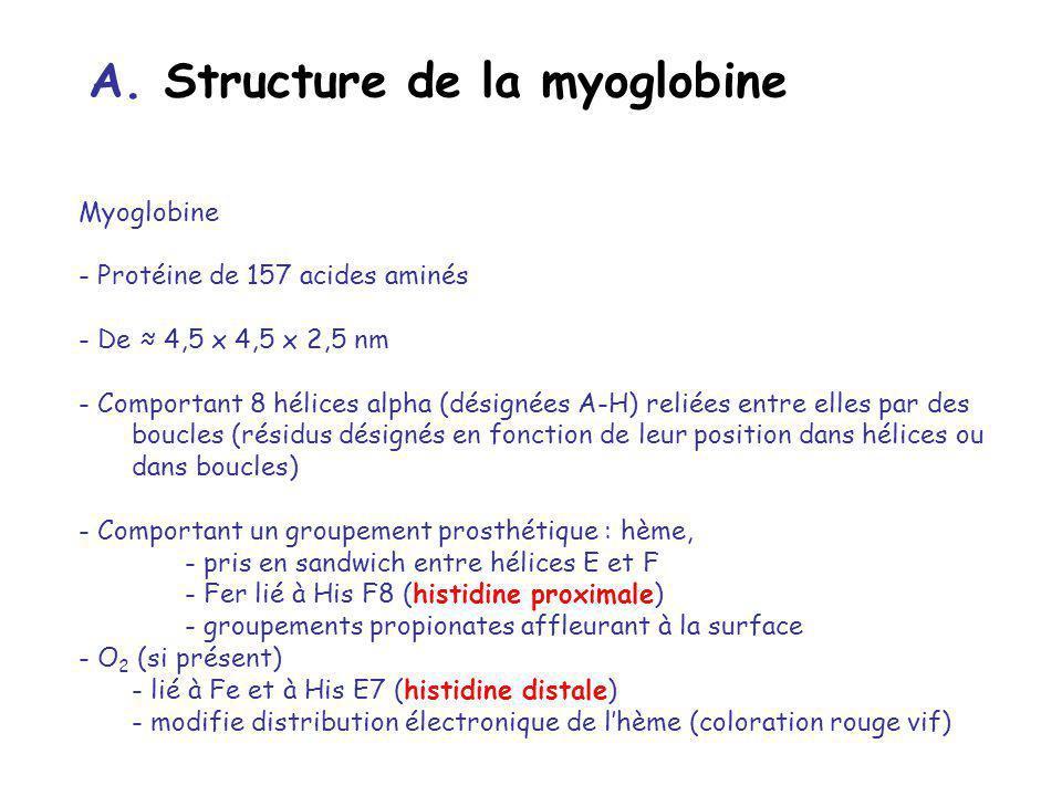 A. Structure de la myoglobine Myoglobine - Protéine de 157 acides aminés - De 4,5 x 4,5 x 2,5 nm - Comportant 8 hélices alpha (désignées A-H) reliées