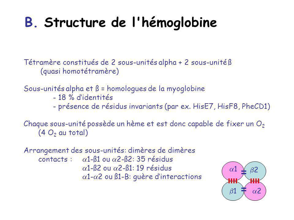 Tétramère constitués de 2 sous-unités alpha + 2 sous-unité ß (quasi homotétramère) Sous-unités alpha et ß = homologues de la myoglobine - 18 % didentités - présence de résidus invariants (par ex.