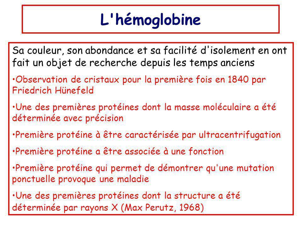 L hémoglobine Sa couleur, son abondance et sa facilité d isolement en ont fait un objet de recherche depuis les temps anciens Observation de cristaux pour la première fois en 1840 par Friedrich Hünefeld Une des premières protéines dont la masse moléculaire a été déterminée avec précision Première protéine à être caractérisée par ultracentrifugation Première protéine a être associée à une fonction Première protéine qui permet de démontrer qu une mutation ponctuelle provoque une maladie Une des premières protéines dont la structure a été déterminée par rayons X (Max Perutz, 1968)