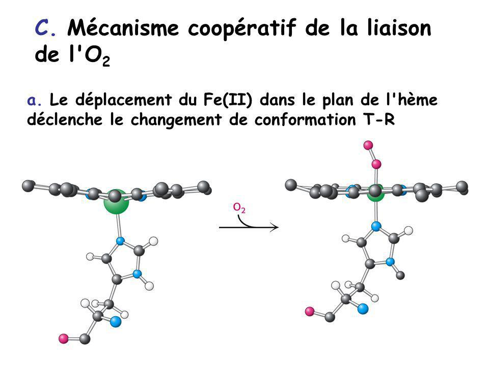 C. Mécanisme coopératif de la liaison de l'O 2 a. Le déplacement du Fe(II) dans le plan de l'hème déclenche le changement de conformation T-R