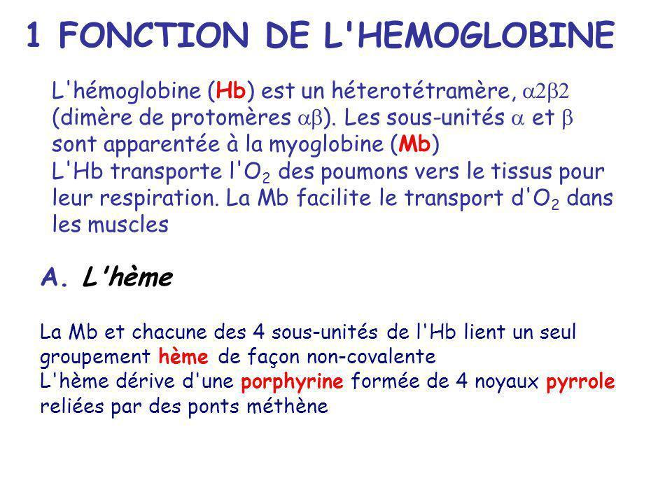 A. L'hème La Mb et chacune des 4 sous-unités de l'Hb lient un seul groupement hème de façon non-covalente L'hème dérive d'une porphyrine formée de 4 n