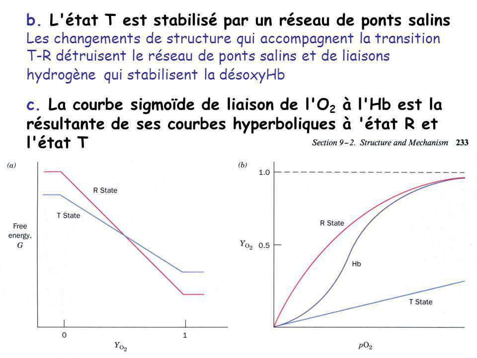 b. L'état T est stabilisé par un réseau de ponts salins Les changements de structure qui accompagnent la transition T-R détruisent le réseau de ponts