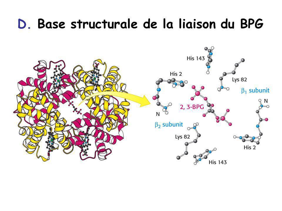 D. Base structurale de la liaison du BPG