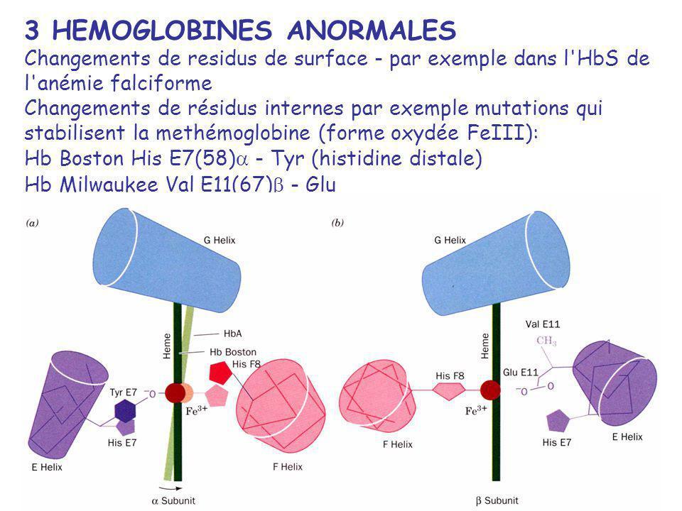 3 HEMOGLOBINES ANORMALES Changements de residus de surface - par exemple dans l HbS de l anémie falciforme Changements de résidus internes par exemple mutations qui stabilisent la methémoglobine (forme oxydée FeIII): Hb Boston His E7(58) - Tyr (histidine distale) Hb Milwaukee Val E11(67) - Glu