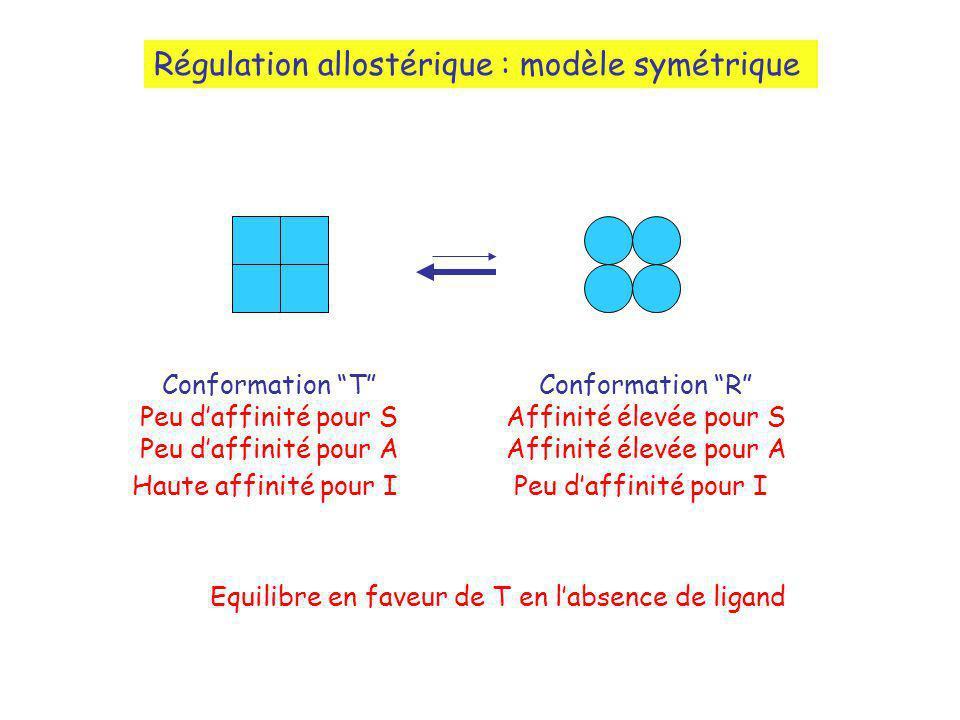 Régulation allostérique : modèle symétrique Conformation T Peu daffinité pour S Peu daffinité pour A Haute affinité pour I Conformation R Affinité élevée pour S Affinité élevée pour A Peu daffinité pour I Equilibre en faveur de T en labsence de ligand