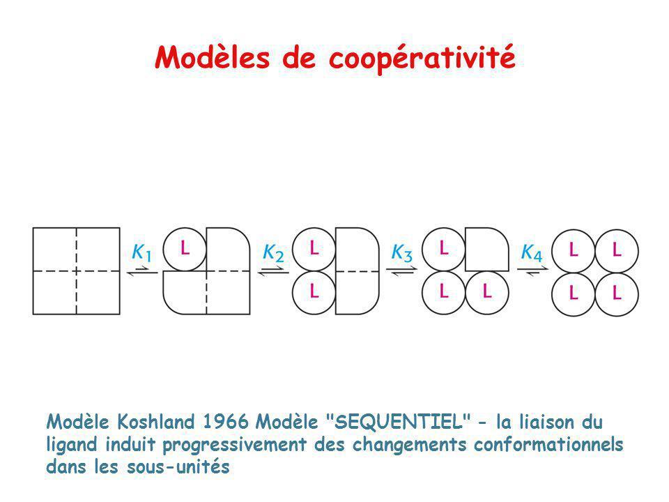 Modèle Koshland 1966 Modèle SEQUENTIEL - la liaison du ligand induit progressivement des changements conformationnels dans les sous-unités Modèles de coopérativité