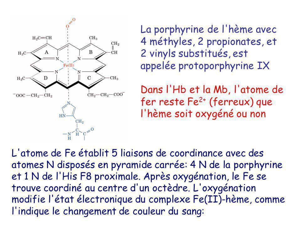 La porphyrine de l hème avec 4 méthyles, 2 propionates, et 2 vinyls substitués, est appelée protoporphyrine IX Dans l Hb et la Mb, l atome de fer reste Fe 2+ (ferreux) que l hème soit oxygéné ou non L atome de Fe établit 5 liaisons de coordinance avec des atomes N disposés en pyramide carrée: 4 N de la porphyrine et 1 N de l His F8 proximale.