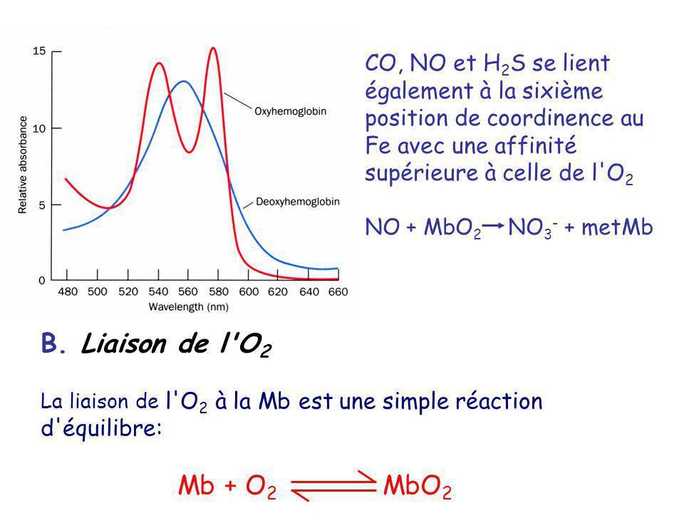 CO, NO et H 2 S se lient également à la sixième position de coordinence au Fe avec une affinité supérieure à celle de l O 2 NO + MbO 2 NO 3 - + metMb B.