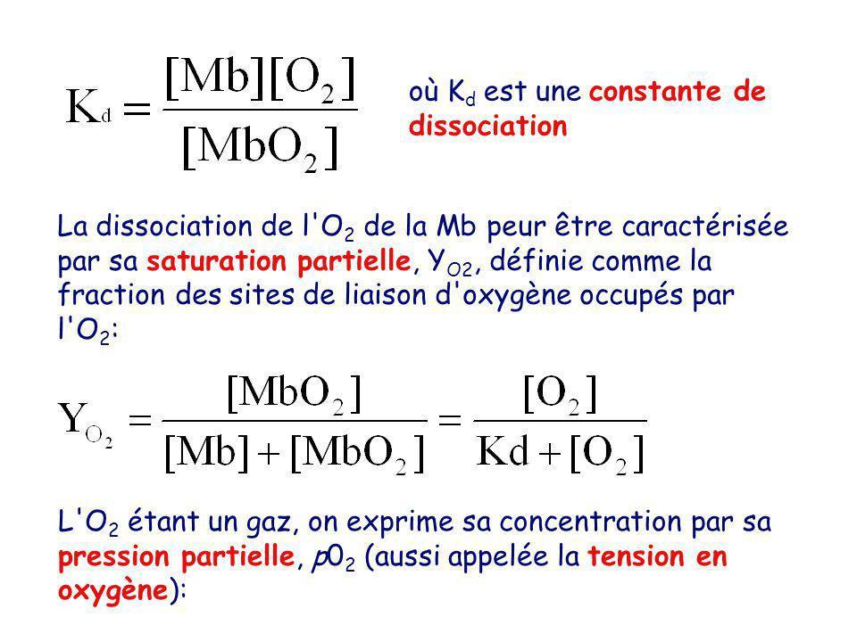 où K d est une constante de dissociation La dissociation de l O 2 de la Mb peur être caractérisée par sa saturation partielle, Y O2, définie comme la fraction des sites de liaison d oxygène occupés par l O 2 : L O 2 étant un gaz, on exprime sa concentration par sa pression partielle, p0 2 (aussi appelée la tension en oxygène):