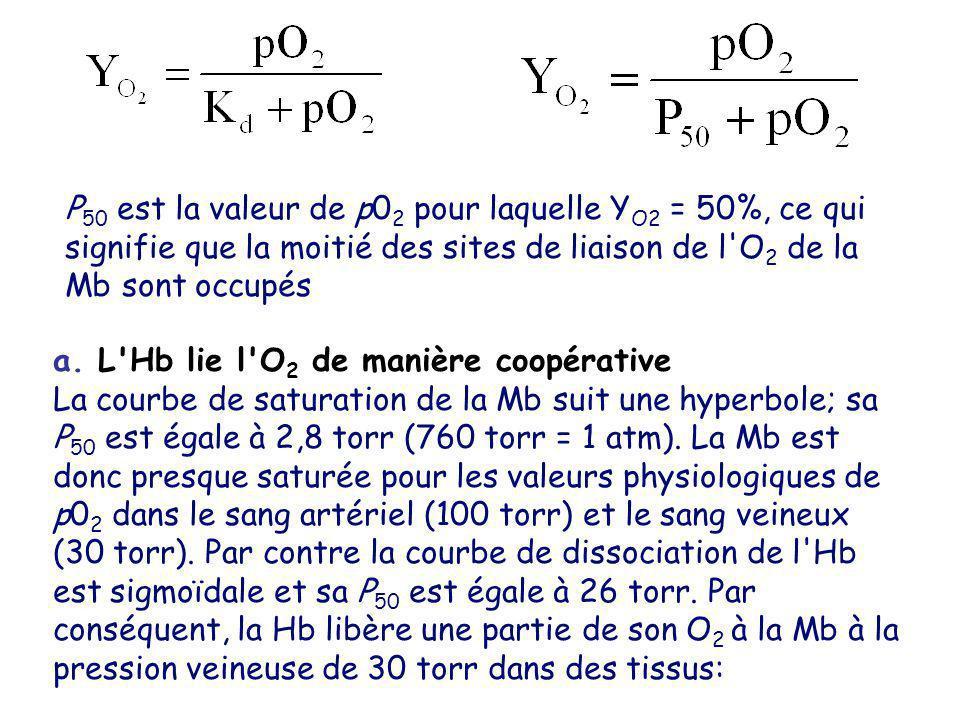 P 50 est la valeur de p0 2 pour laquelle Y O2 = 50%, ce qui signifie que la moitié des sites de liaison de l'O 2 de la Mb sont occupés a. L'Hb lie l'O