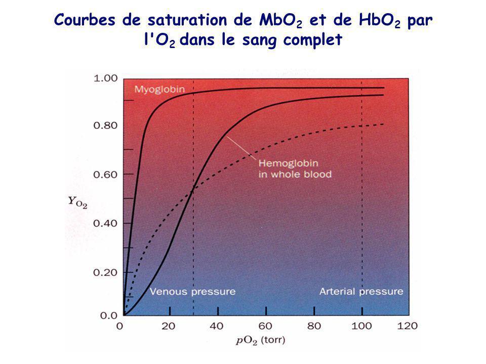 Courbes de saturation de MbO 2 et de HbO 2 par l'O 2 dans le sang complet