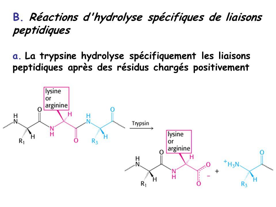 B.Réactions d hydrolyse spécifiques de liaisons peptidiques a.