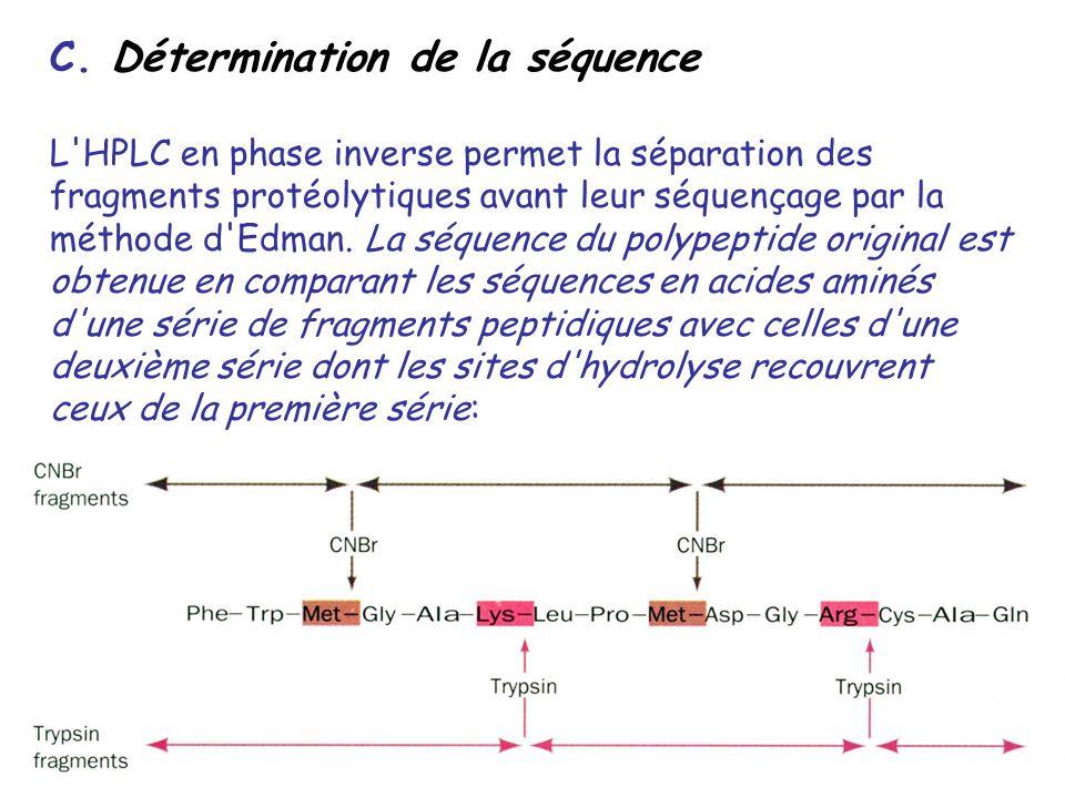 C. Détermination de la séquence L'HPLC en phase inverse permet la séparation des fragments protéolytiques avant leur séquençage par la méthode d'Edman