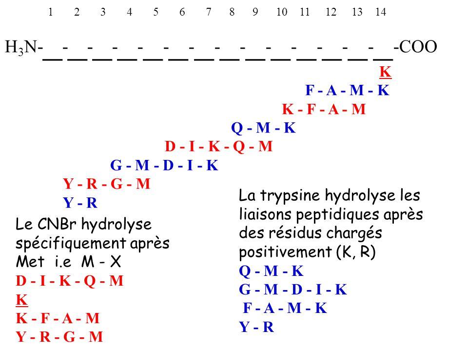 1 2 3 4 5 6 7 8 9 10 11 12 13 14 H 3 N- _ - _ - _ - _ - _ - _ - _ - _ - _ - _ - _ - _ - _ - _ -COO K F - A - M - K K - F - A - M Q - M - K D - I - K - Q - M G - M - D - I - K Y - R - G - M Y - R Le CNBr hydrolyse spécifiquement après Met i.e M - X D - I - K - Q - M K K - F - A - M Y - R - G - M La trypsine hydrolyse les liaisons peptidiques après des résidus chargés positivement (K, R) Q - M - K G - M - D - I - K F - A - M - K Y - R
