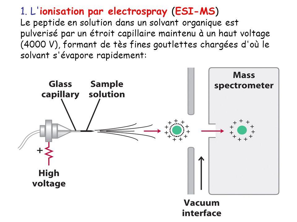1. L'ionisation par electrospray (ESI-MS) Le peptide en solution dans un solvant organique est pulverisé par un étroit capillaire maintenu à un haut v