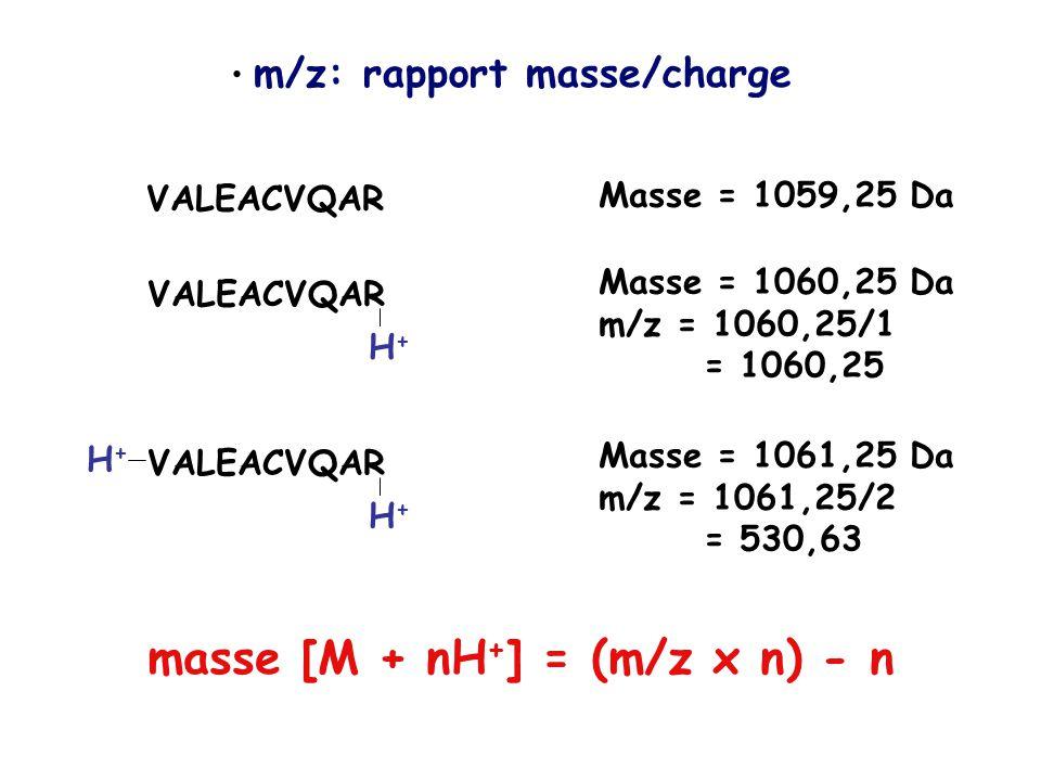 m/z: rapport masse/charge VALEACVQAR Masse = 1059,25 Da VALEACVQAR H+H+ Masse = 1060,25 Da m/z = 1060,25/1 = 1060,25 VALEACVQAR H+H+ H+H+ Masse = 1061,25 Da m/z = 1061,25/2 = 530,63 masse [M + nH + ] = (m/z x n) - n