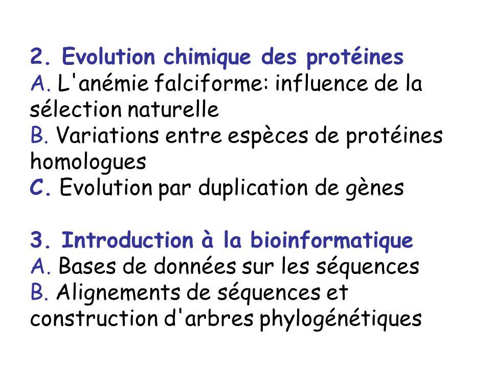 2.Evolution chimique des protéines A. L anémie falciforme: influence de la sélection naturelle B.