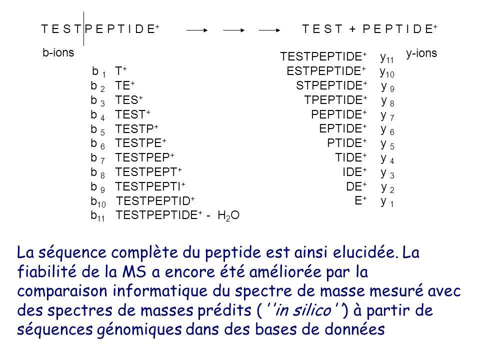 T E S T P E P T I D E + T E S T + P E P T I D E + b 1 T + b 2 TE + b 3 TES + b 4 TEST + b 5 TESTP + b 6 TESTPE + b 7 TESTPEP + b 8 TESTPEPT + b 9 TESTPEPTI + b 10 TESTPEPTID + b 11 TESTPEPTIDE + - H 2 O TESTPEPTIDE + y 11 ESTPEPTIDE + y 10 STPEPTIDE + y 9 TPEPTIDE + y 8 PEPTIDE + y 7 EPTIDE + y 6 PTIDE + y 5 TIDE + y 4 IDE + y 3 DE + y 2 E + y 1 b-ions y-ions La séquence complète du peptide est ainsi elucidée.