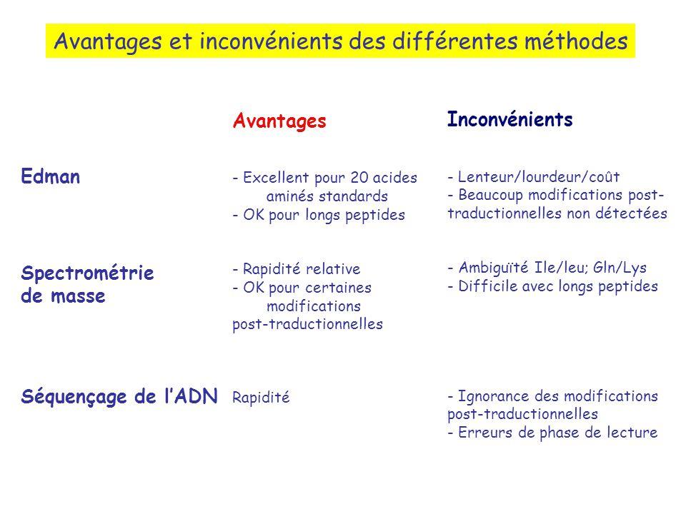 Avantages et inconvénients des différentes méthodes Edman Spectrométrie de masse Séquençage de lADN Avantages - Excellent pour 20 acides aminés standards - OK pour longs peptides - Rapidité relative - OK pour certaines modifications post-traductionnelles Rapidité Inconvénients - Lenteur/lourdeur/co û t - Beaucoup modifications post- traductionnelles non détectées - Ambiguïté Ile/leu; Gln/Lys - Difficile avec longs peptides - Ignorance des modifications post-traductionnelles - Erreurs de phase de lecture