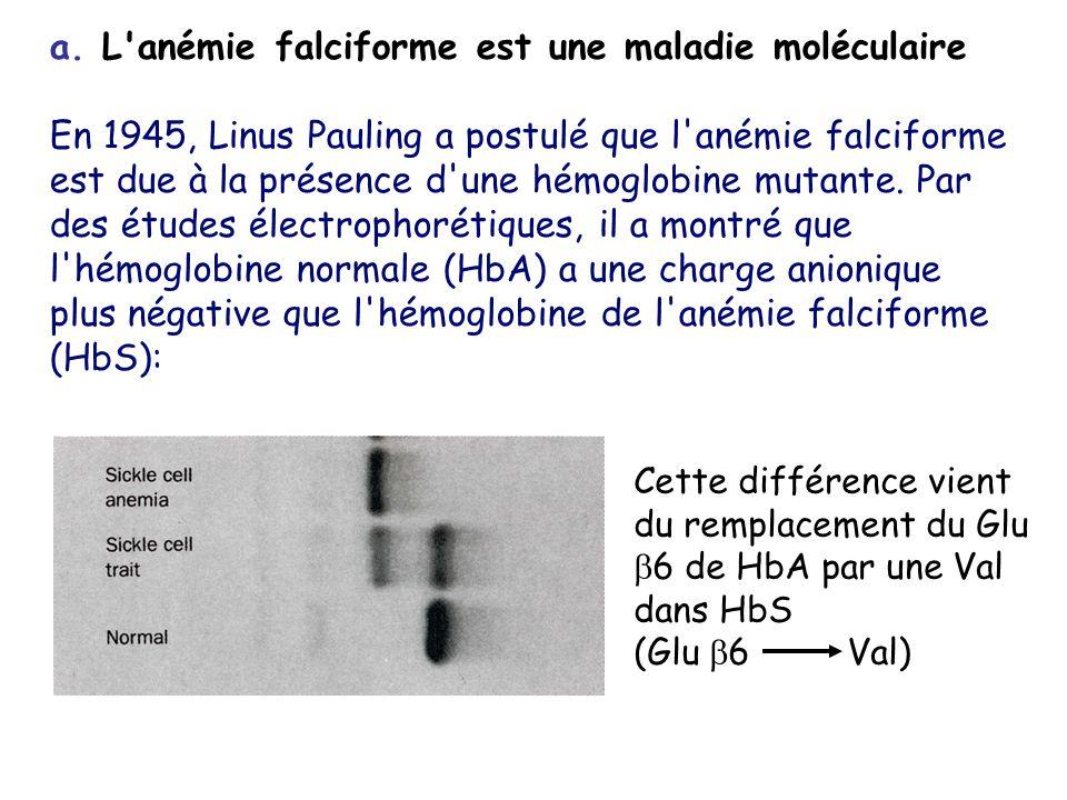 a. L'anémie falciforme est une maladie moléculaire En 1945, Linus Pauling a postulé que l'anémie falciforme est due à la présence d'une hémoglobine mu