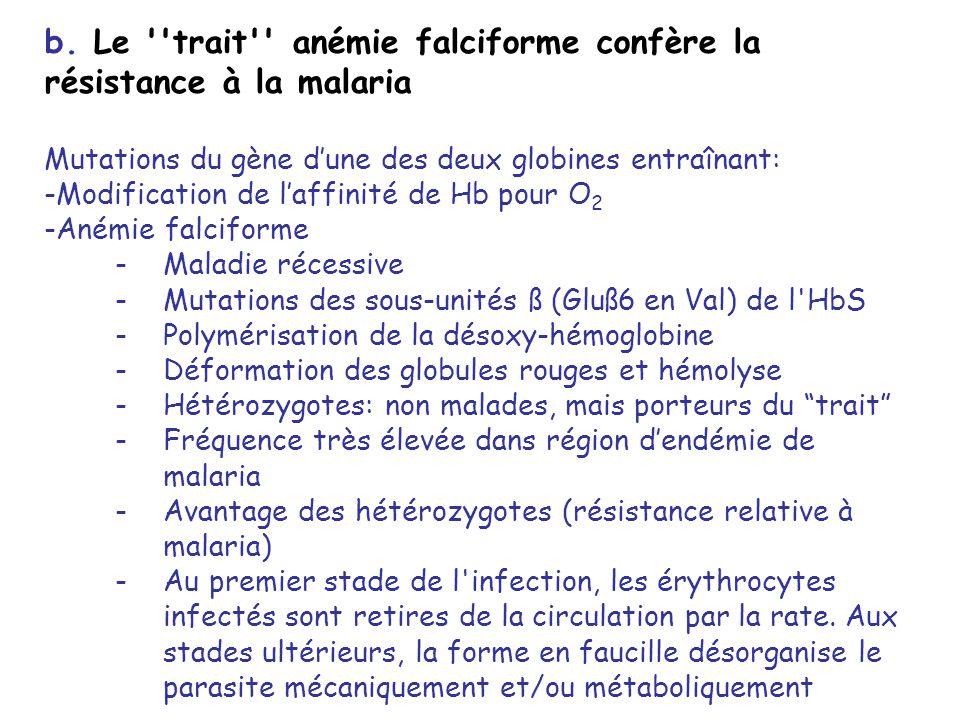 b. Le ''trait'' anémie falciforme confère la résistance à la malaria Mutations du gène dune des deux globines entraînant: -Modification de laffinité d