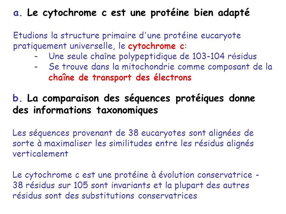 a. Le cytochrome c est une protéine bien adapté Etudions la structure primaire d'une protéine eucaryote pratiquement universelle, le cytochrome c: -Un